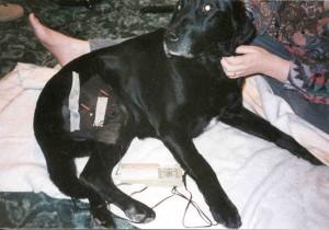 dog post surgery